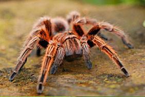 Controle de aranhas em Campinas