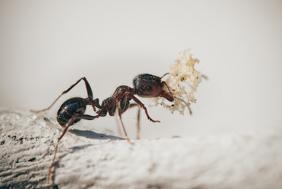 Cuidado com infestação de formigas