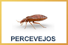 Percevejo